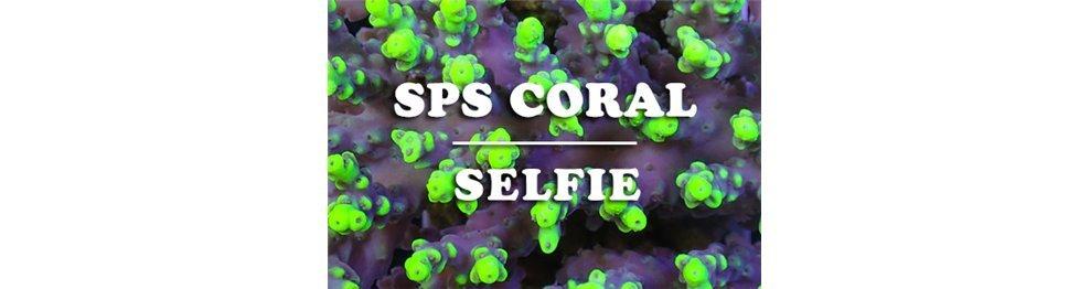 Corales SPS (WYSIWYG)