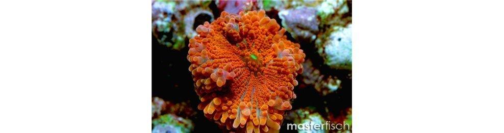 Corales blandoss y otros